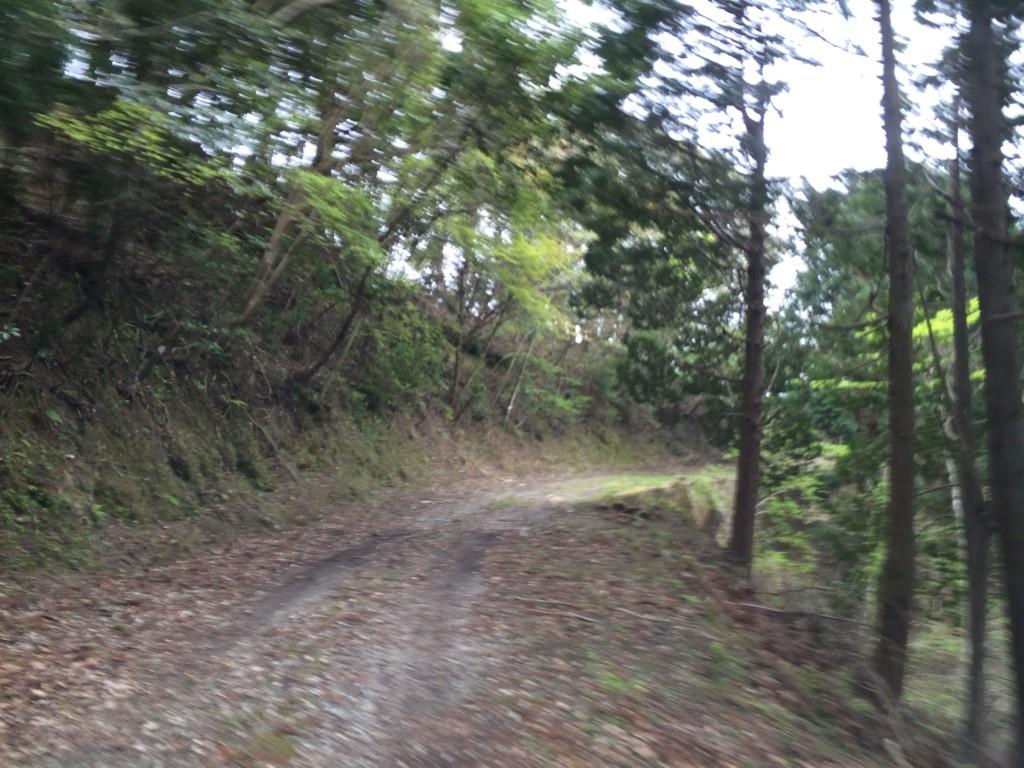 杉戸林道-8