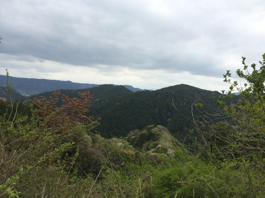 袖ノ木林道-6