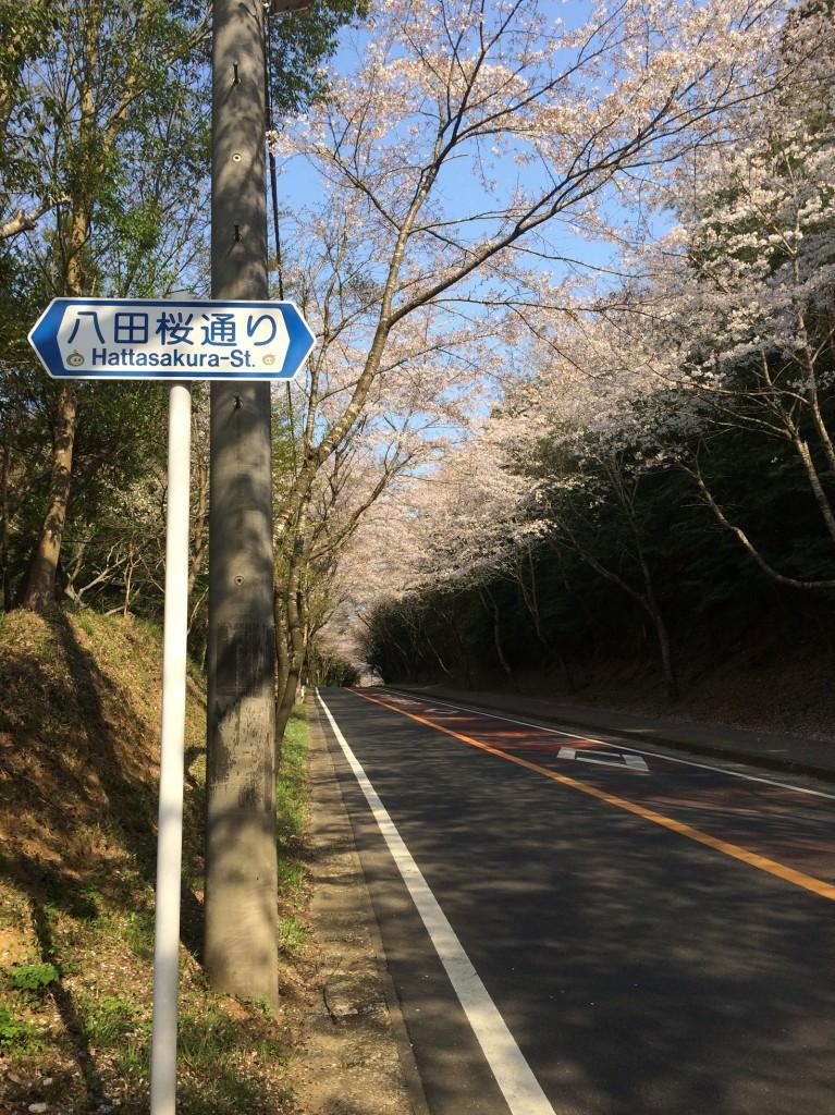 多古町の里山と桜