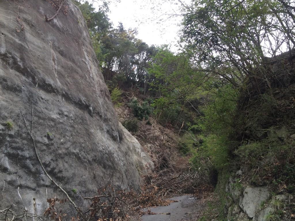 高山林道-3