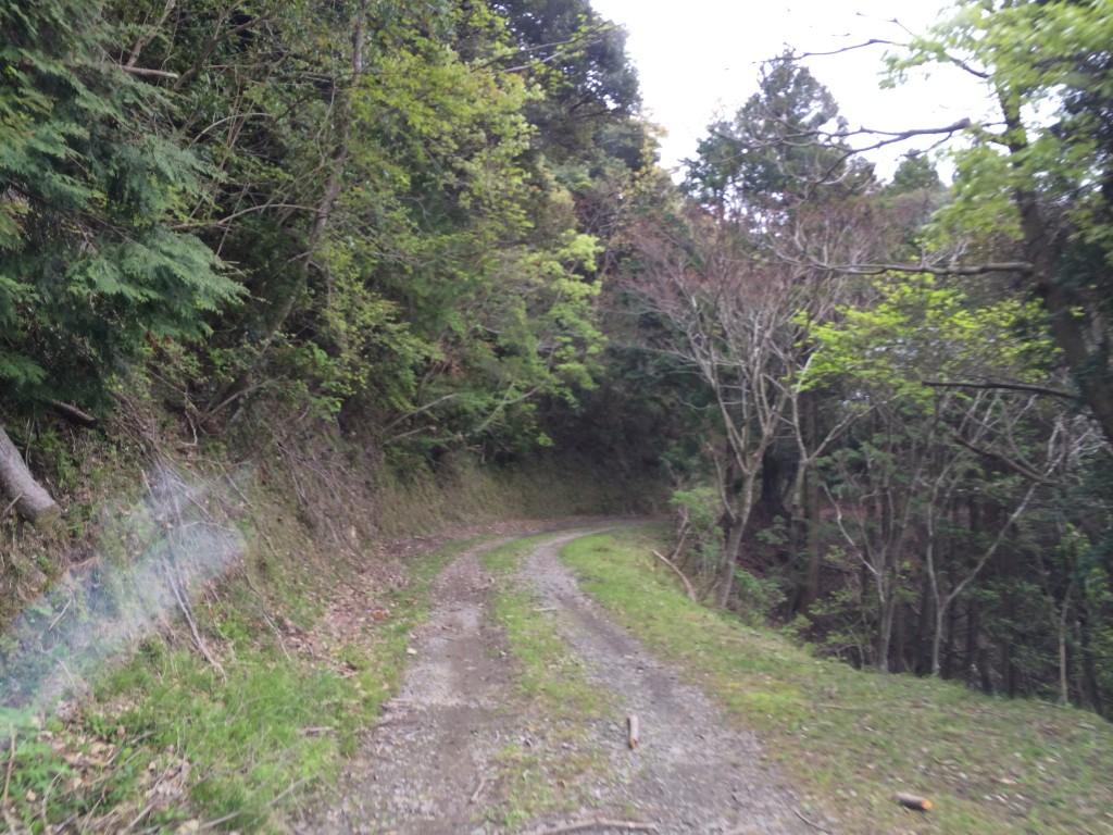 杉戸林道-7